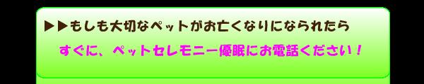 もしもペットか亡くなったら、埼玉県の犬や猫のペット火葬は埼玉ペット火葬の優眠にご連絡ください