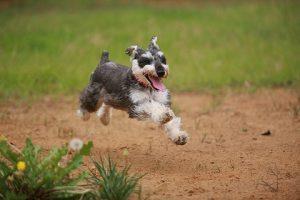 埼玉県で犬や猫のペット火葬・葬儀は優眠へ