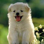 埼玉県の犬火葬・犬葬儀は優眠へ