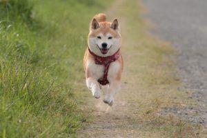 埼玉ペット火葬の優眠の埼玉県の無料出張エリアです。