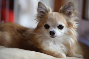 埼玉県川越市で犬のペット火葬なら優眠へ