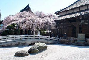 埼玉、さいたま市、埼玉県、ペット、火葬