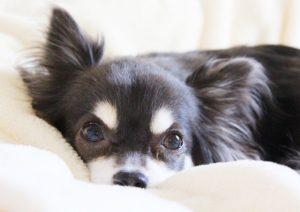 埼玉県で犬のペット火葬は優眠にお任せ