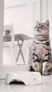 飯能市の猫のペット火葬なら飯能市ペット火葬の優眠へ