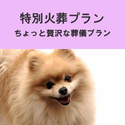 埼玉県のペット葬儀なら優眠の特別火葬プラン